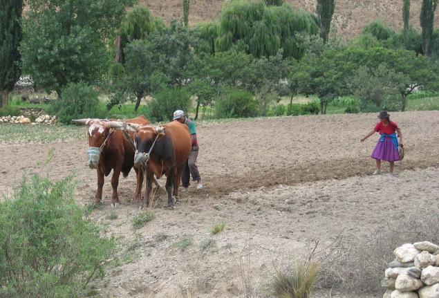 Sowing in a river valley, Bolivia.