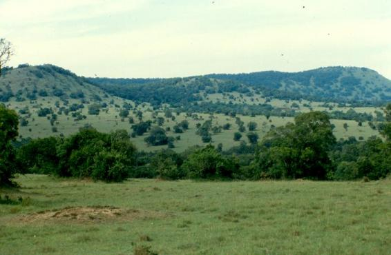 The evergreen and beautiful Transmara area where Intona Ranch was located.