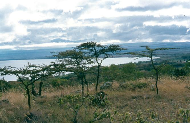 Lake Naivasha in the distance.