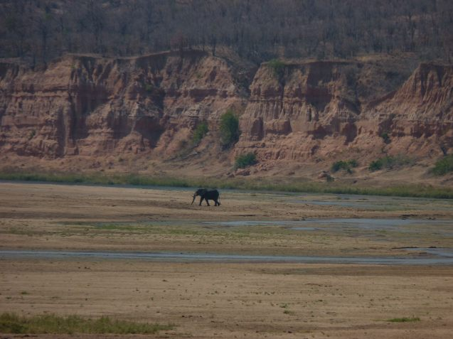 A lone elephant shows the immensity of the Gonarezhou National Park, Zimbabwe