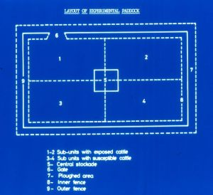 """An """"antique"""" blue slide to show the paddock design. There were five cattle in each of the sub-units 1 to 4."""