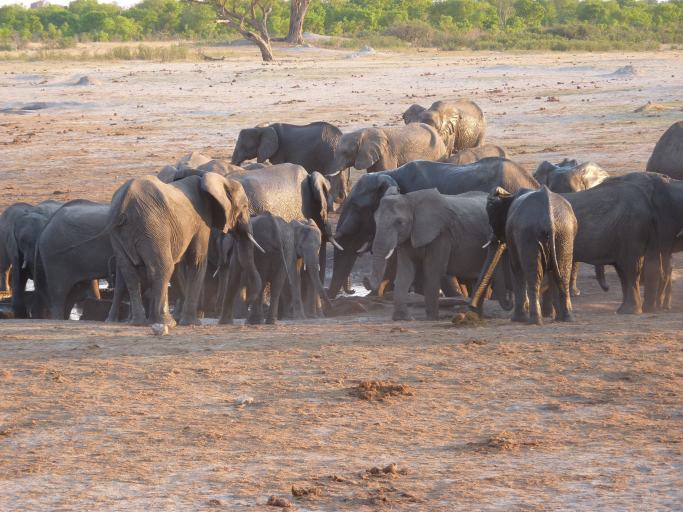 The most popular drinking place was where the fresh water entered the waterhole.