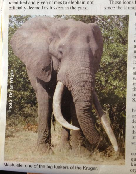 Masthulele depicted in the SANParks Times article.