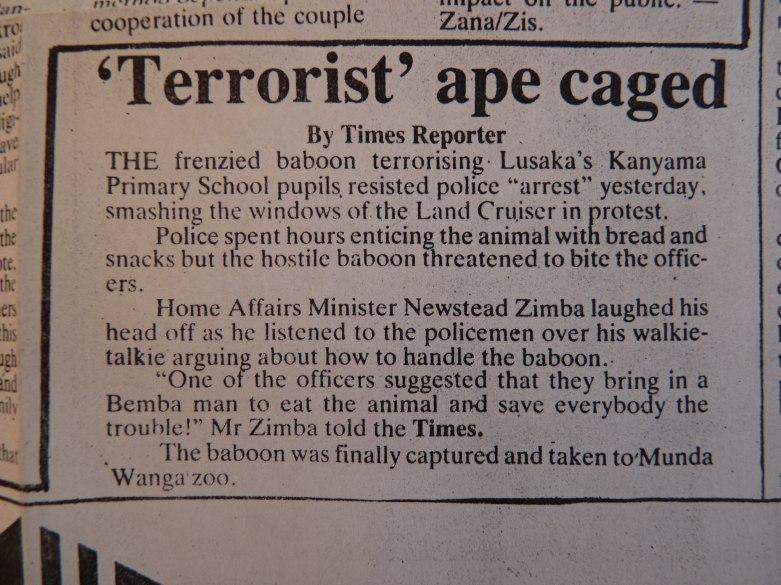Ape news cutting small