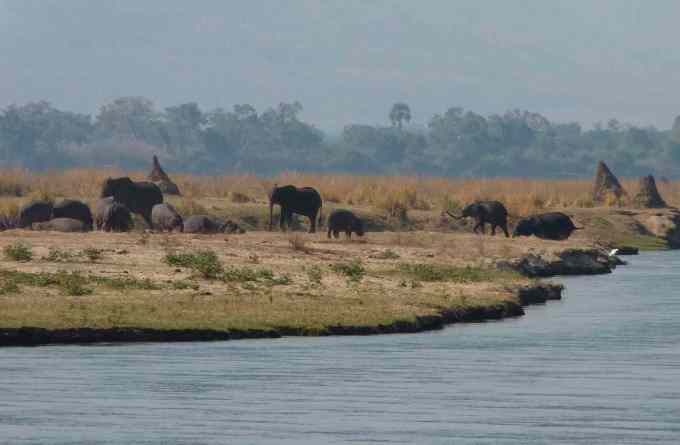 elephants and hippos
