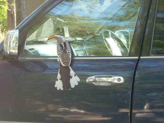 hornbill on glass small