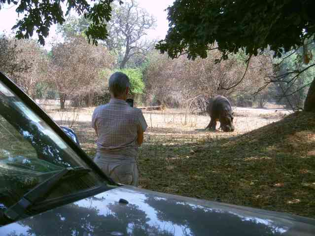 My wife keeping an eye on our hippo visitor during a day visit.