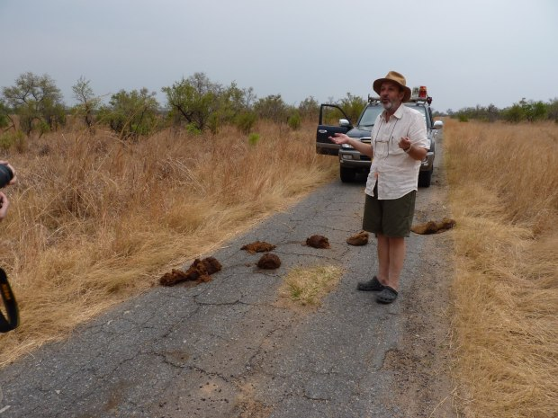 elephant road block Hwange 2