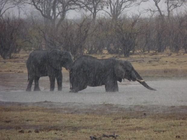 elephants start to hail