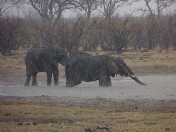 elephants start to hail