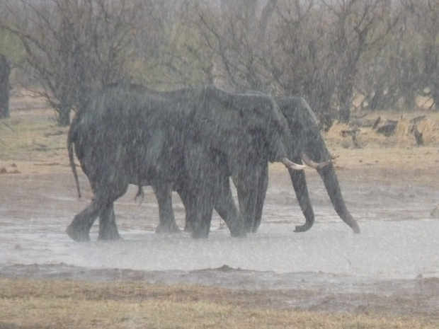 elephants under hail