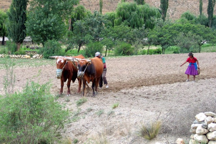 Sowing in an Andean valley near Potosí, Bolivia.