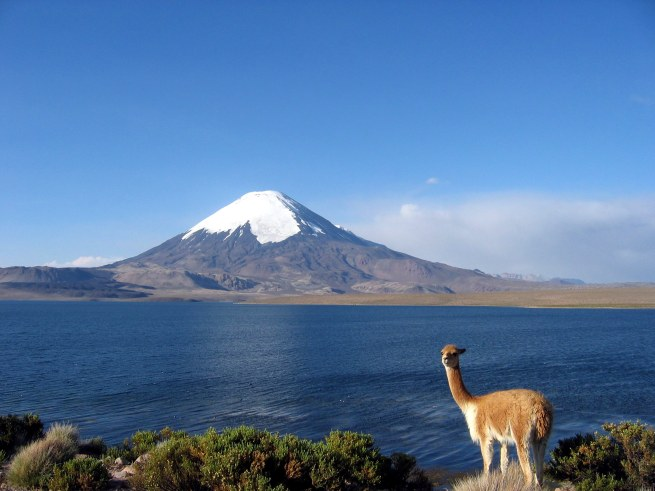 A view of the Andes with a  Vicuña in attendance.