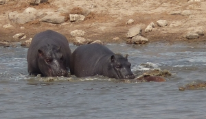 "The Hippos ""rescue"" attempt at Point 2."