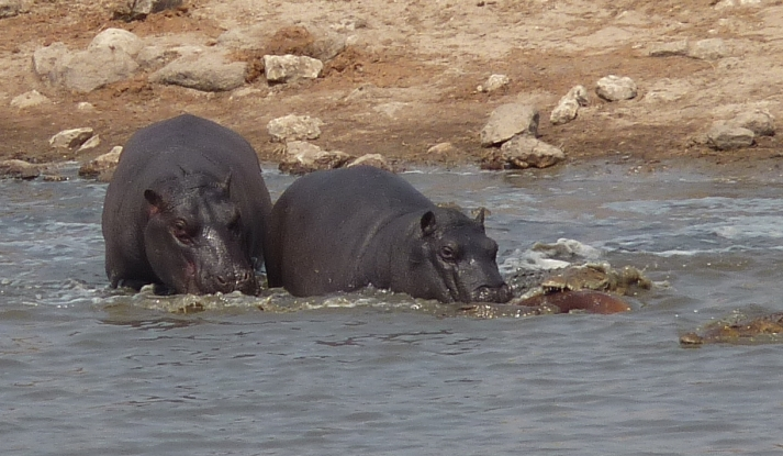 """The Hippos """"rescue"""" attempt at Point 2."""