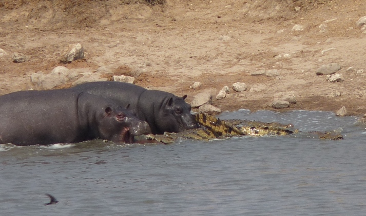"""Another view of the Hippos' """"rescue"""" attempt at Point 2."""