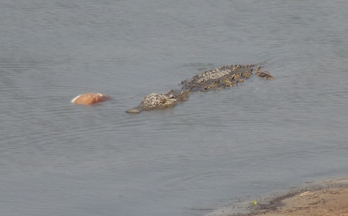 The Crocodile avoided the Hippos at Point 2 and moves to Point 3.