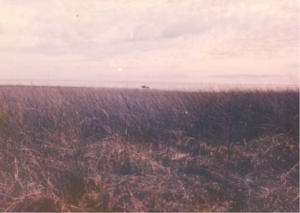 The speck in the background is the semi-submerged Land Rover then there is open water and in the forefront an extensive area of water covered with bulrushes.