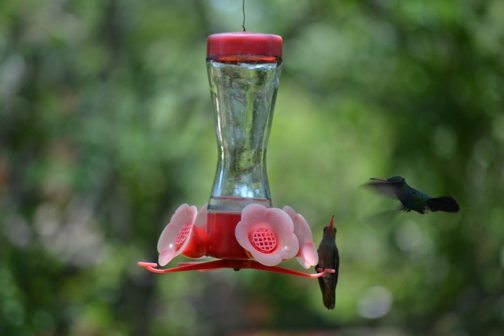 A second one lands on the feeder.
