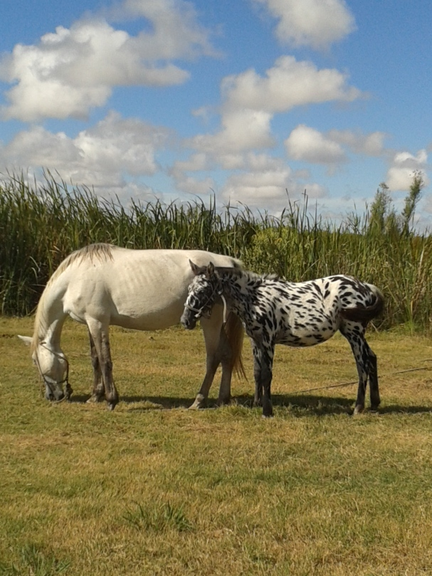 An older version of the zebra-like horse.