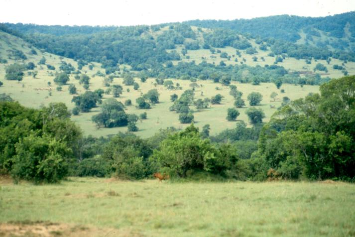 A view of Intona ranch in  the Transmara parkland.