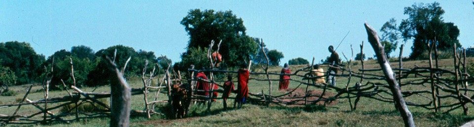 cropped-cropped-t-mara-maasai-treating-their-cattle-kilai.jpg