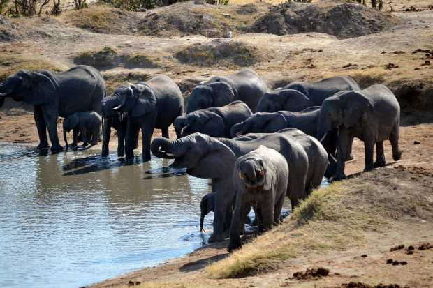 THis time there were lots of elephants at Masuma dam. (Photo by Julio A. de Castro & Mariana Terra)