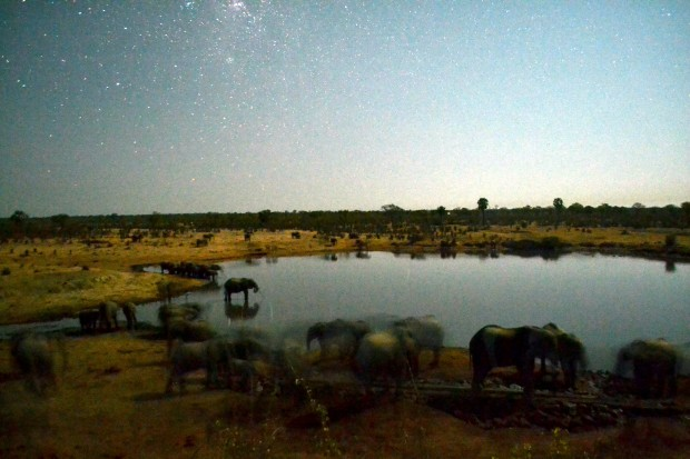 "A night picture of the dam with drinking elephants. I applied the Picasa ""I am feeling lucky"" command to get light into the picture."