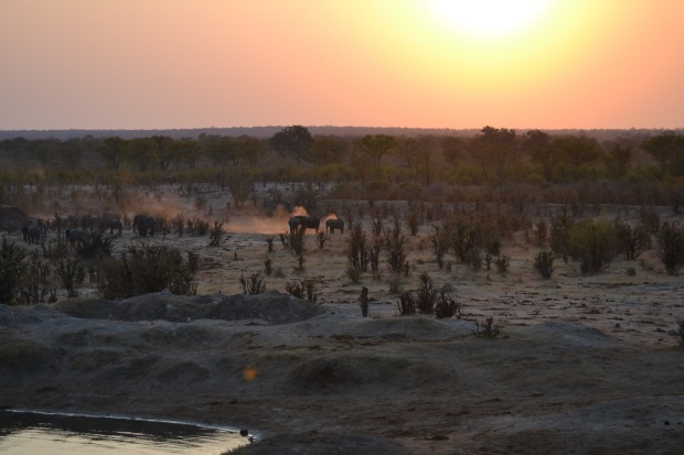 Sunset with elephants dusting themselves.