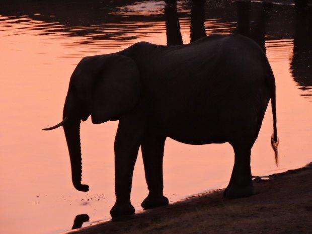 We even saw pink elephants... (Photo by Julio A. de Castro & Mariana Terra)