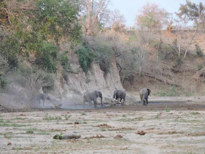 The elephants suddenly appeared (and disappeared!).