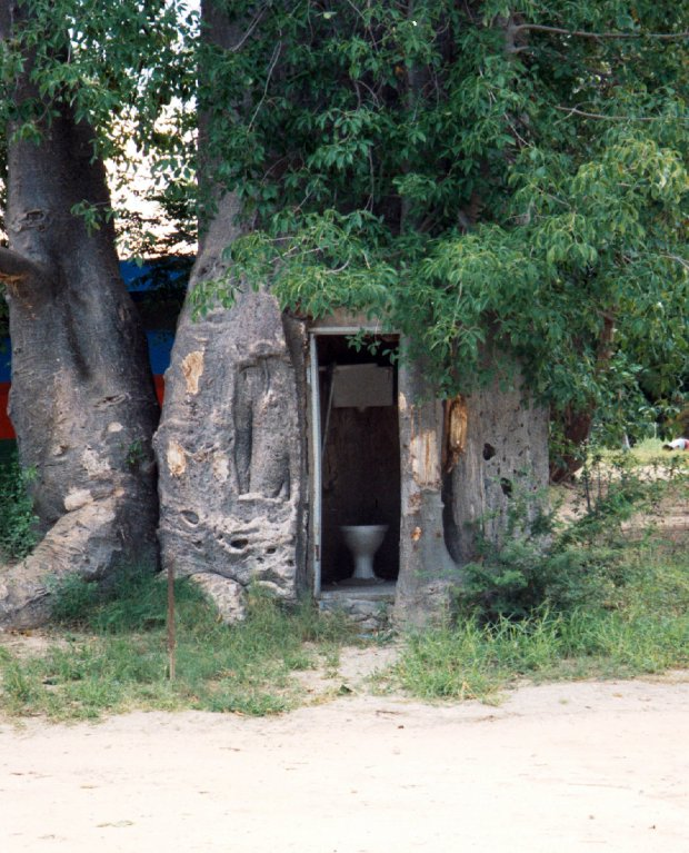 "A close up of the ""toilet baobab"" at Katima Mulilo, Namibia."