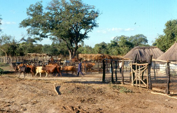 The project site at Lutale, Central Province of Zambia.