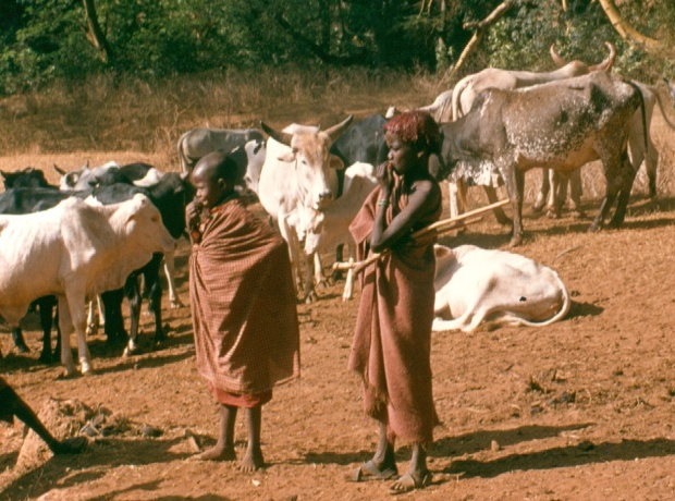 Maasai children looking after livestock.