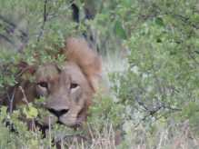 Mopani's close-up