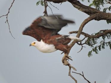 Some of the birds we found on the way to Nyamandlovu.