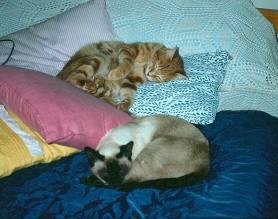bedele-cats
