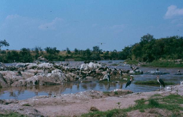 mara-river-after-the-wbeest-crossing