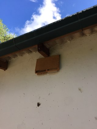 The location of the bat box.