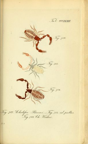 Pseudoscorpions. Attribution: By Hahn, Carl Wilhelm; Koch, C. L. [Public domain], via Wikimedia Commons