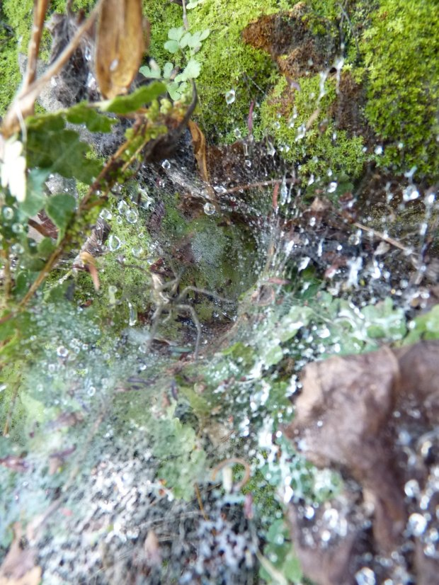 Spot spider revealed copy