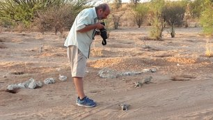 With the meerkats.