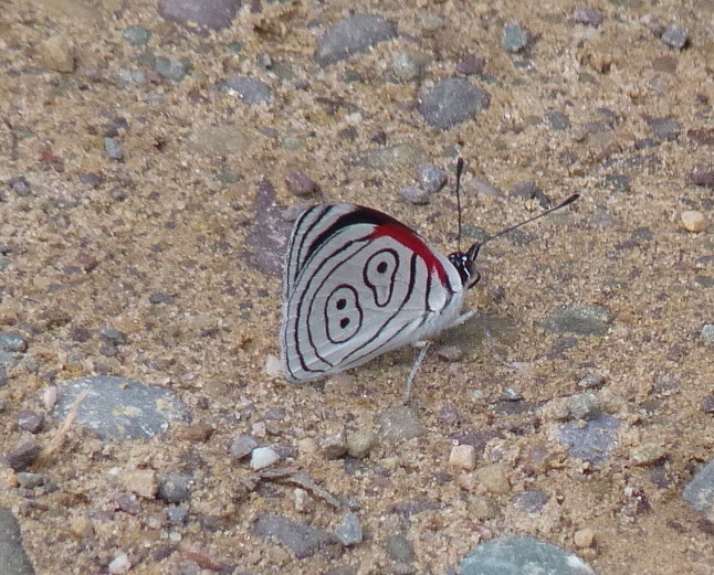 89 butterfly 2 copy