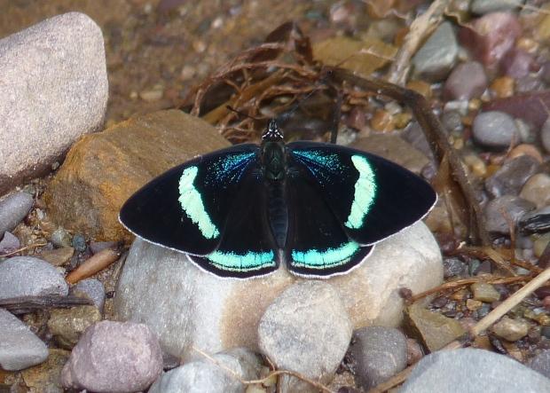 89 butterfly copy