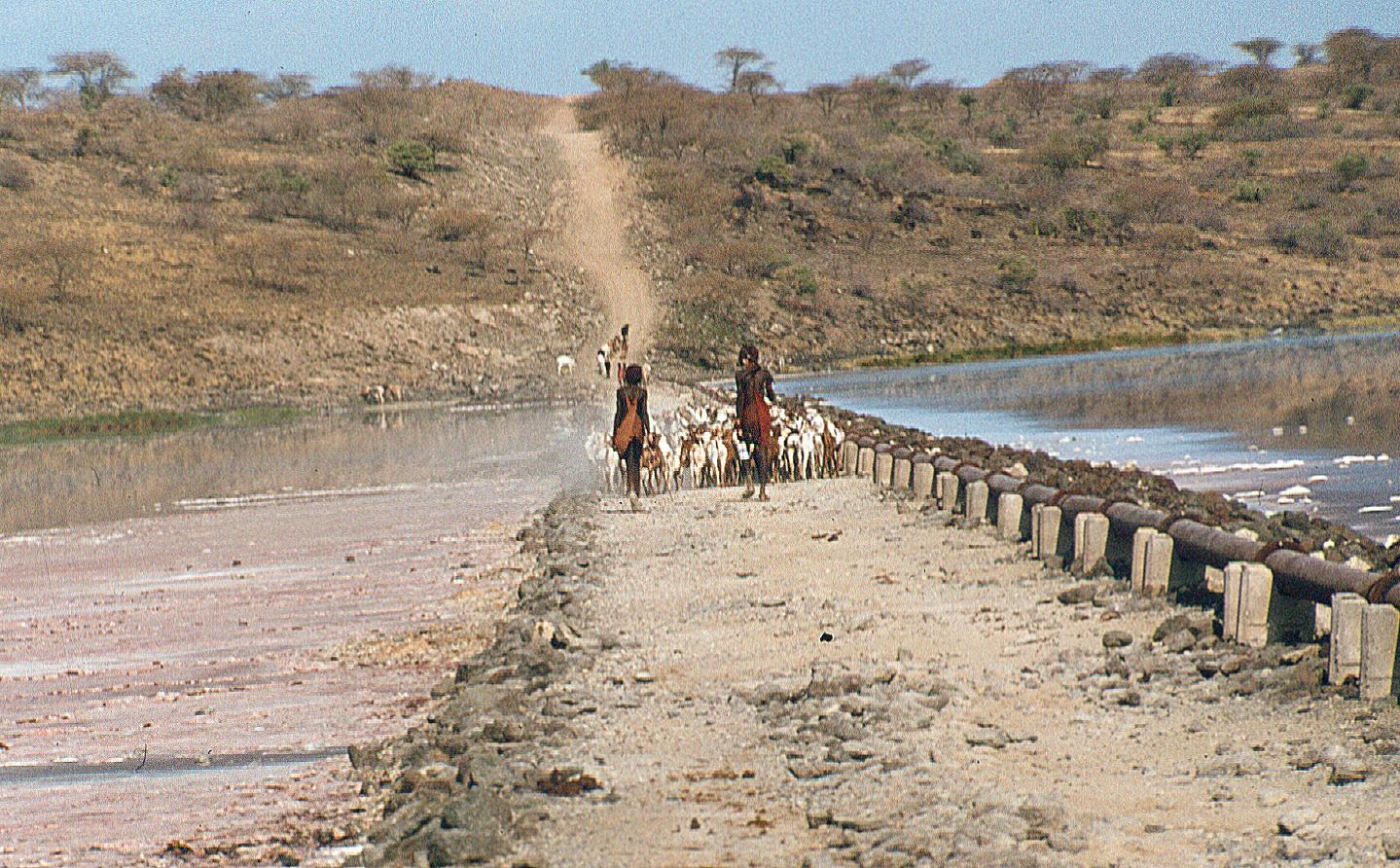 Maasai Magadi causeway.tif