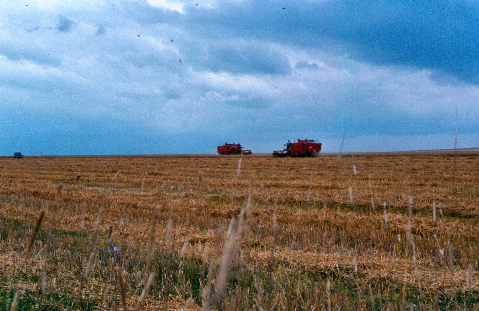 mara wheat harvesting