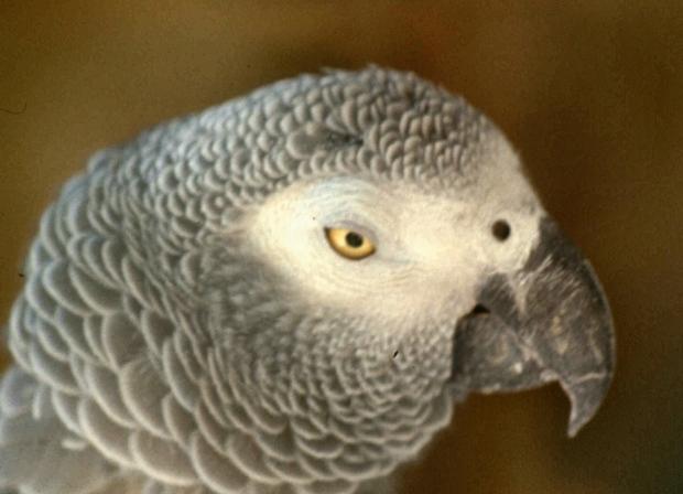 richard parrot