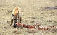 mmara hyena 1