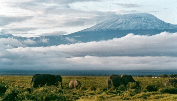 Kili with ellies amboseli 4.55.57 PM copy