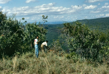 Mabel and Ranjini collecting seeds near the crater rim.